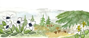Blomsterstation Granskogen. Illustration av Rut Magnusson.